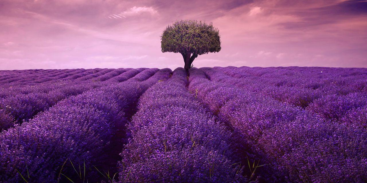 https://secureservercdn.net/45.40.146.38/5b4.689.myftpupload.com/wp-content/uploads/lavender-4222480_1280-1280x640.jpg
