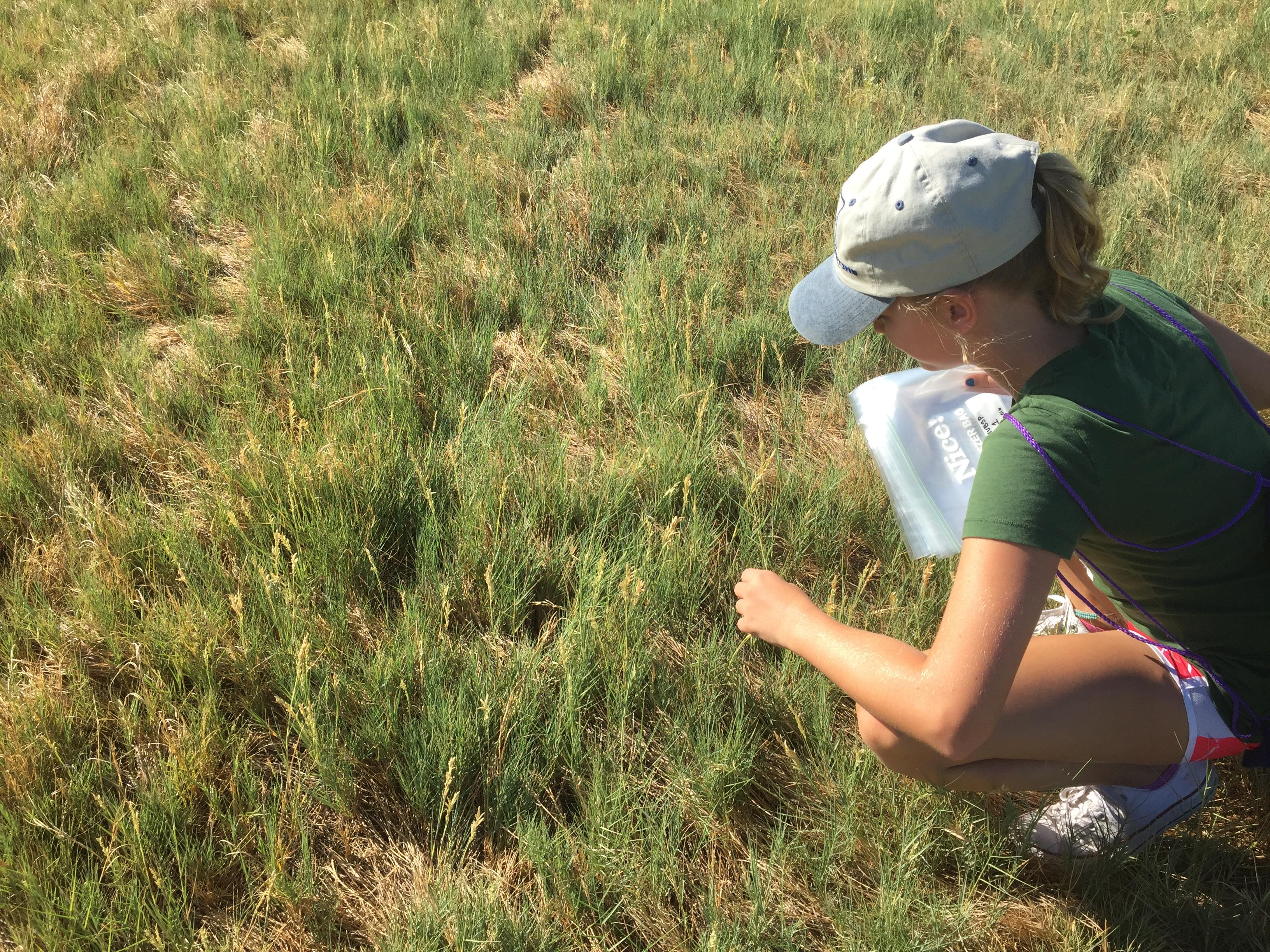 Examining the tall grass