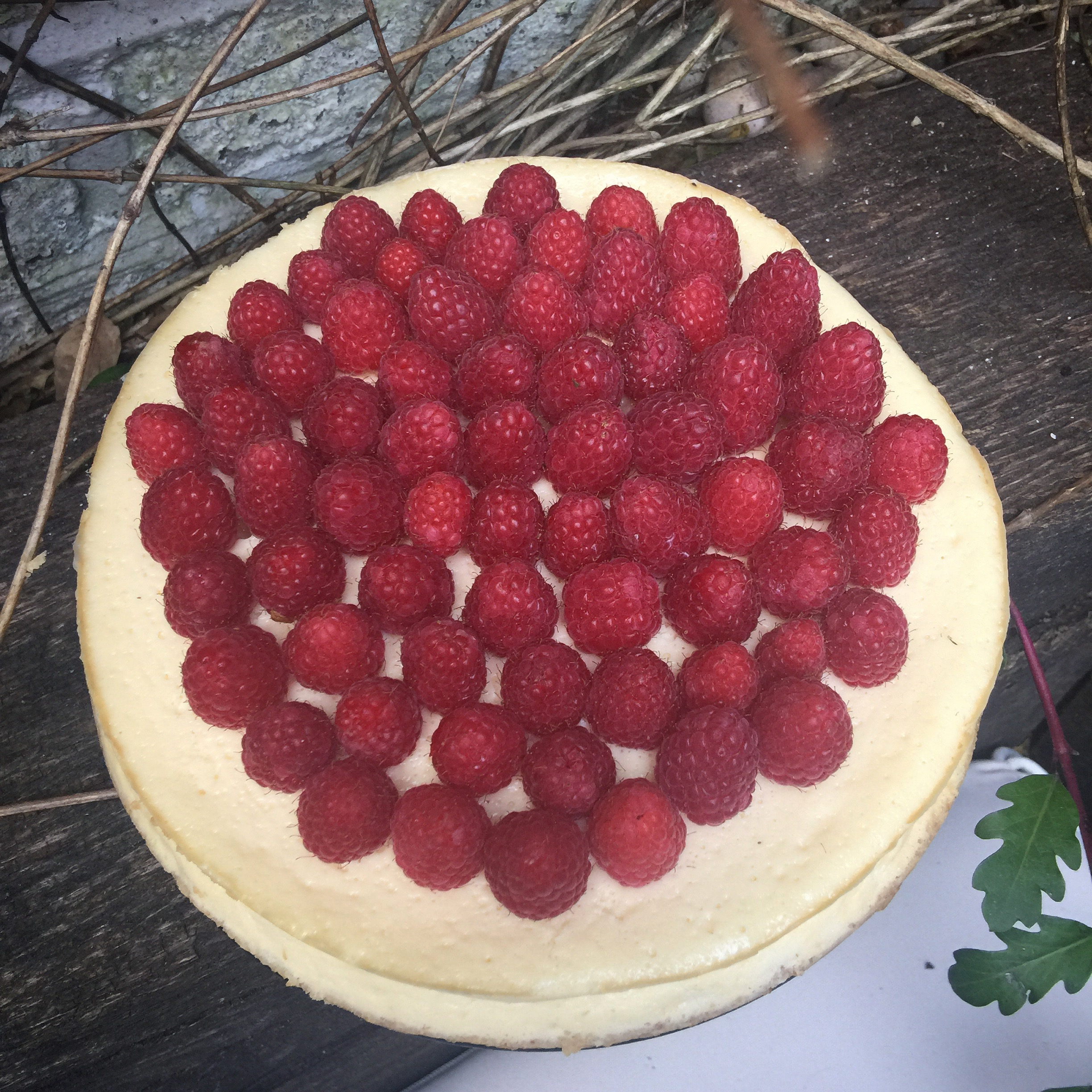 Baked Vanilla Cheesecake with Raspberries