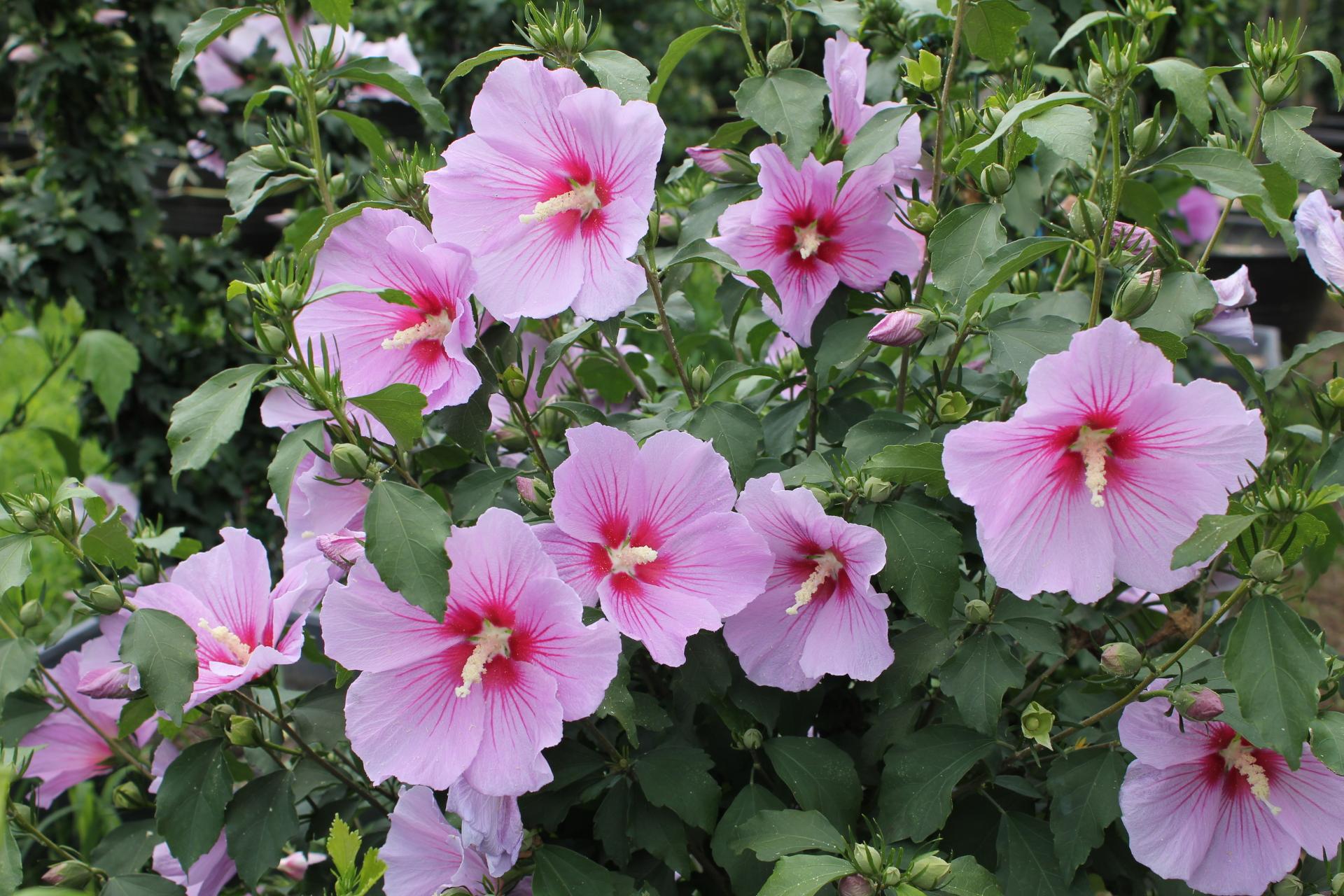 national flower_6_1920_1280