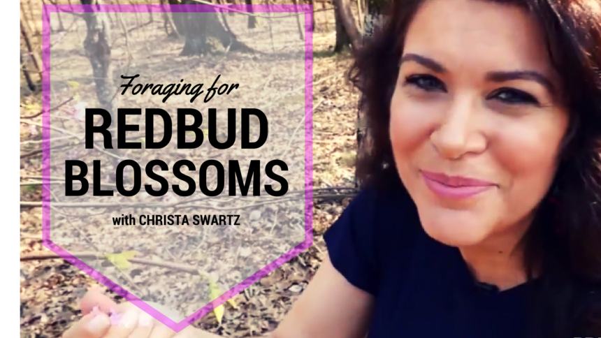 Foraging for Red Bud Blossoms