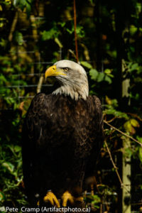 The eagle showed me both profiles