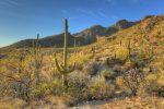 Barrell Cactus lead picture DSC_8511A