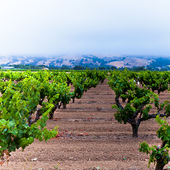 OurVineyards