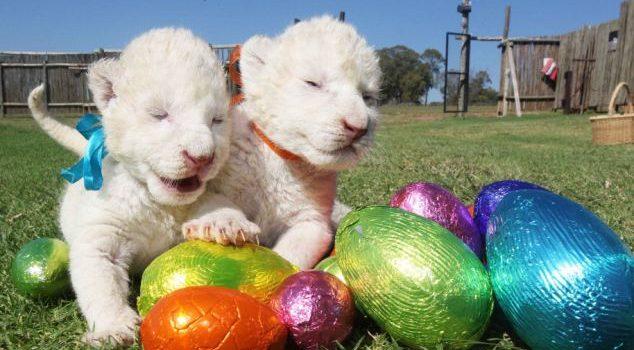 Lions Krav Maga Easter Egg Hunt Krav Junior