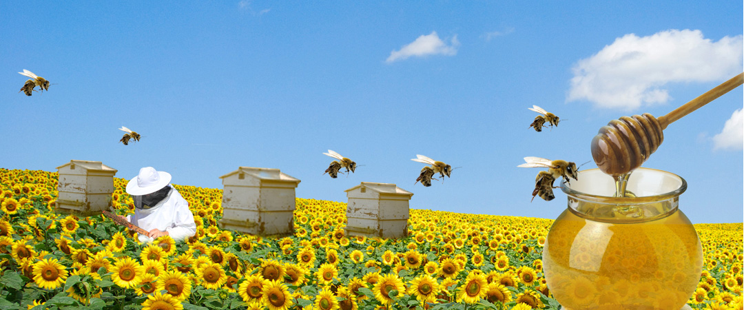 bees flying to bee box