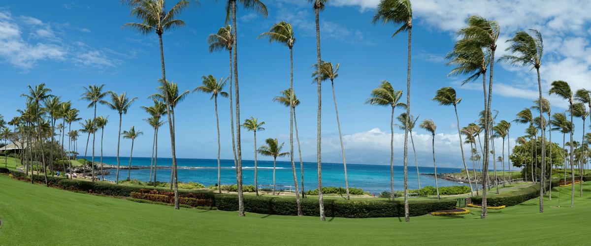 Coconut Grove Kapalua Bay