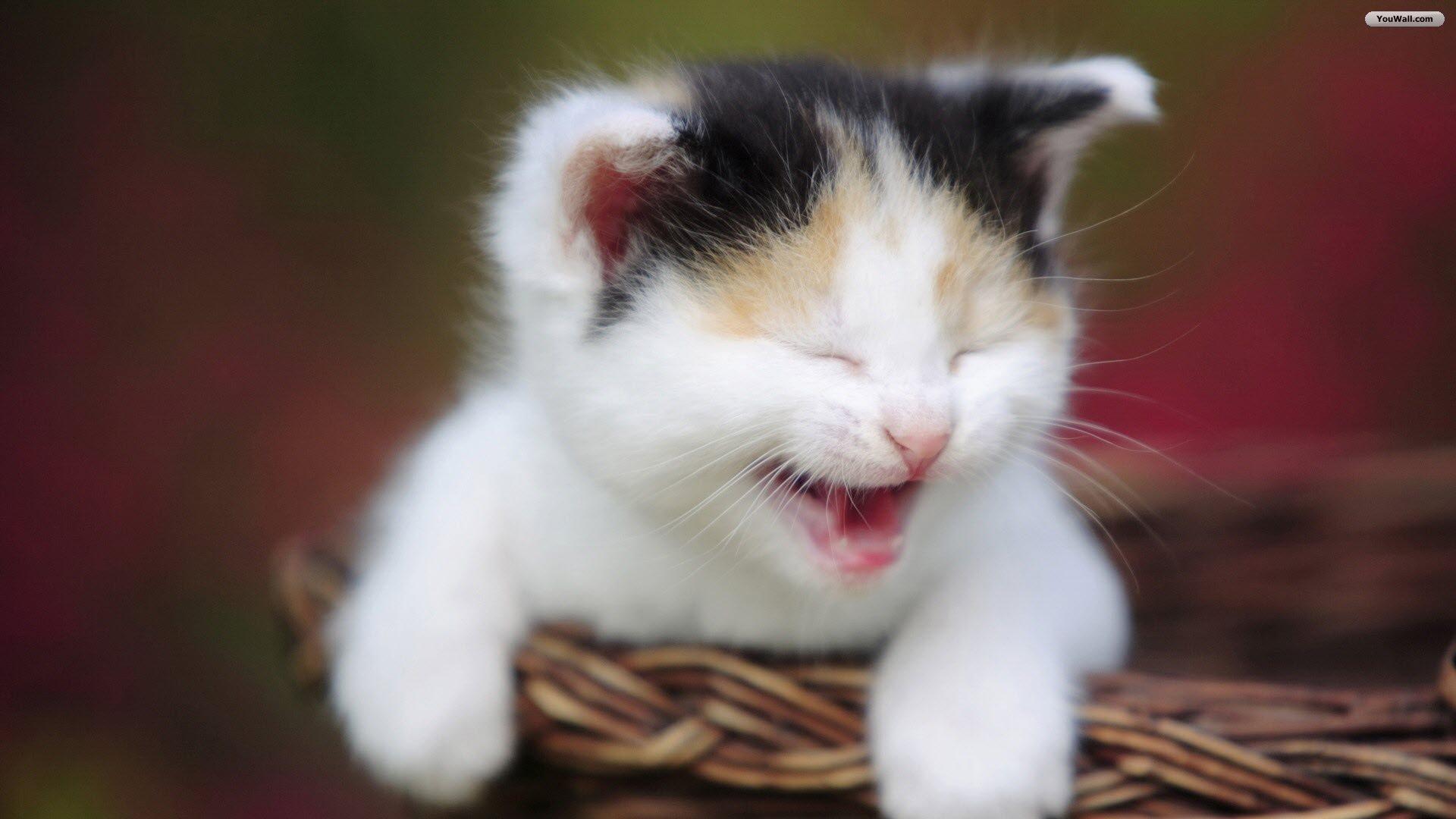Laughing-Cat-Wallpaper-10