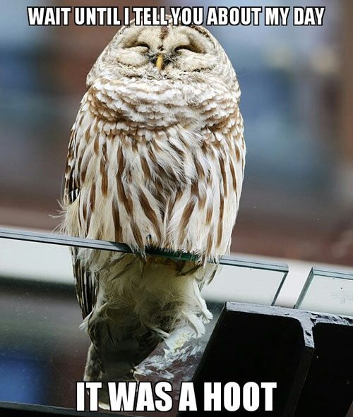 owl-meme-7463-7799-hd-wallpapers