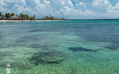 Encuentran tiburones en playa cubana