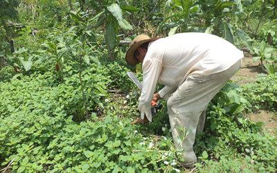 Los precios exuberantes que deberán pagar los campesinos cubanos.