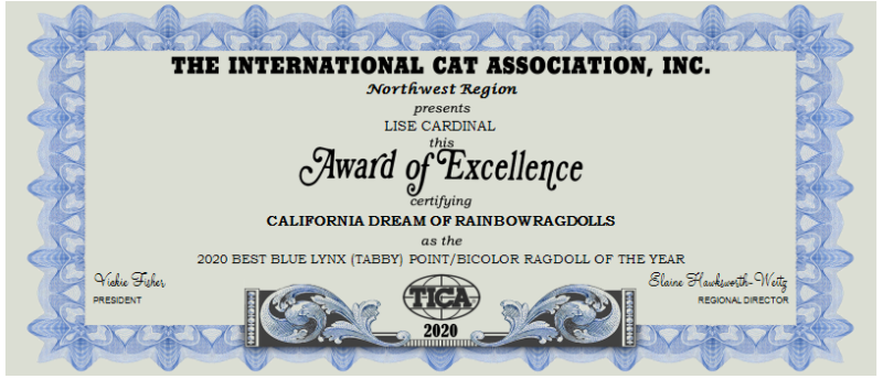 2020 BEST BLUE LYNX (TABBY) POINT-BICOLOR RAGDOLL OF THE YEAR