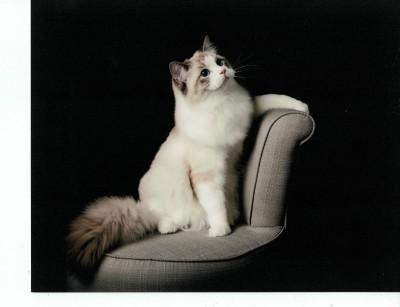 Jack Calgary cat show