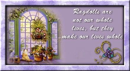 ragdolls (1)