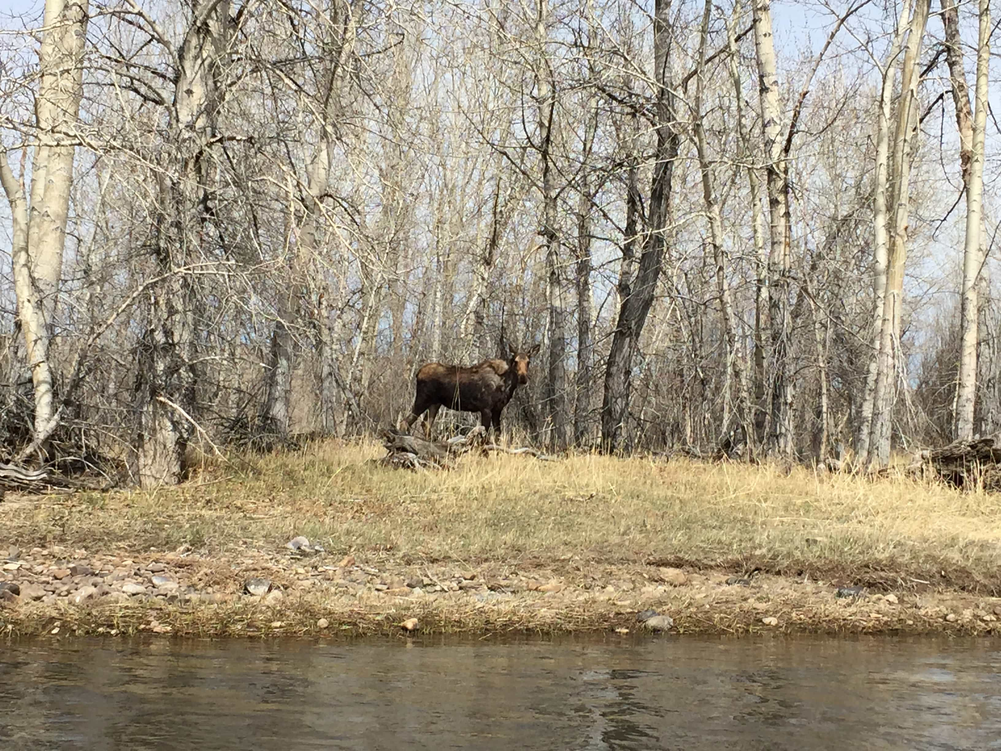 The Moose are out and about enjoying the spring time too!