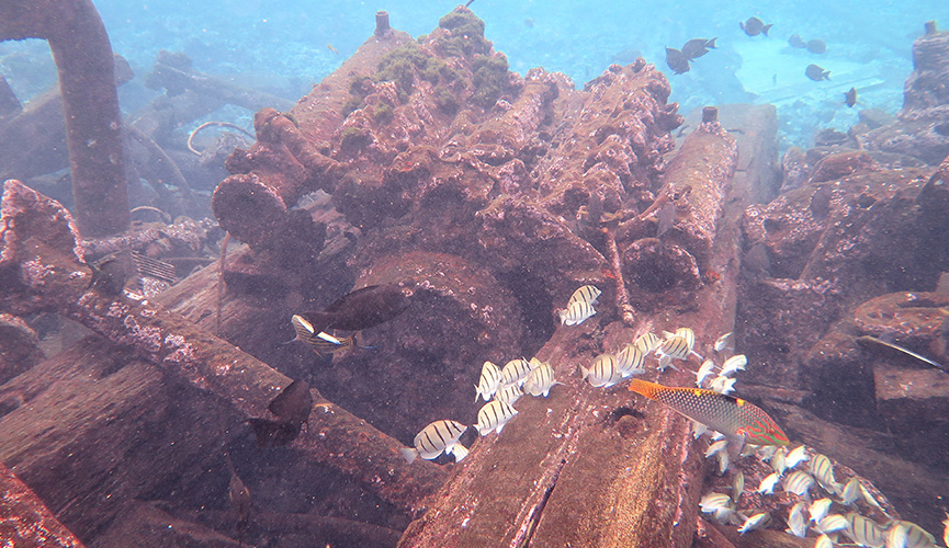 Palmyra Atoll - Kingmen Shipwreck Salvage