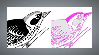 Tracing vectors from imported bird artwork