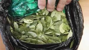 coca hojas
