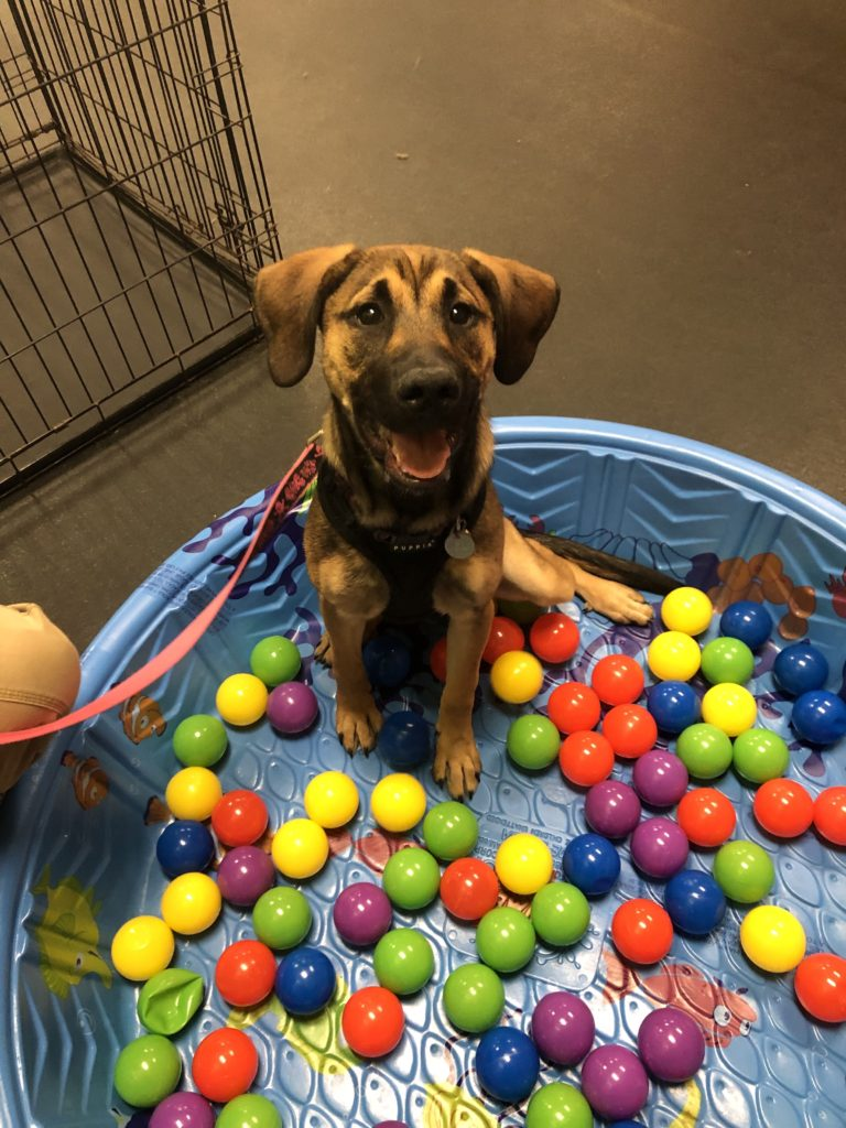 puppy socialization and kindergarten