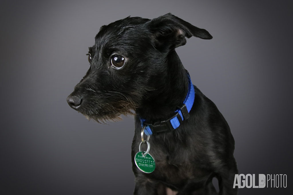 AGoldPhoto_Bolt_Tampa Pet Photography_2