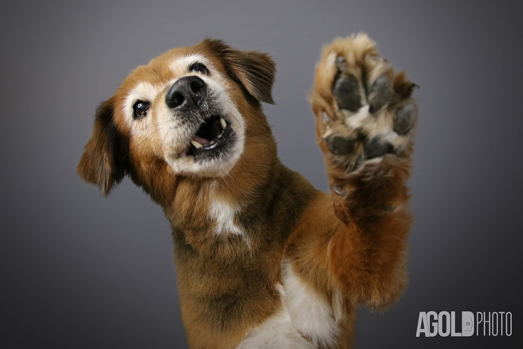 AGoldPhoto_Gypsy_Tampa Pet Photography_6