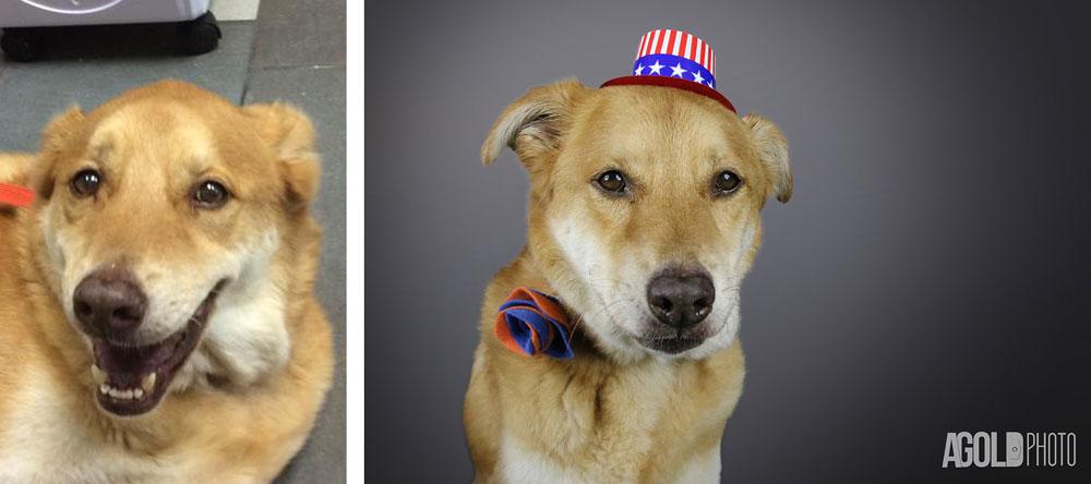 AGoldPhoto_Humane-Society-of-Tampa-Bay_Tampa-Pet-Photography_4