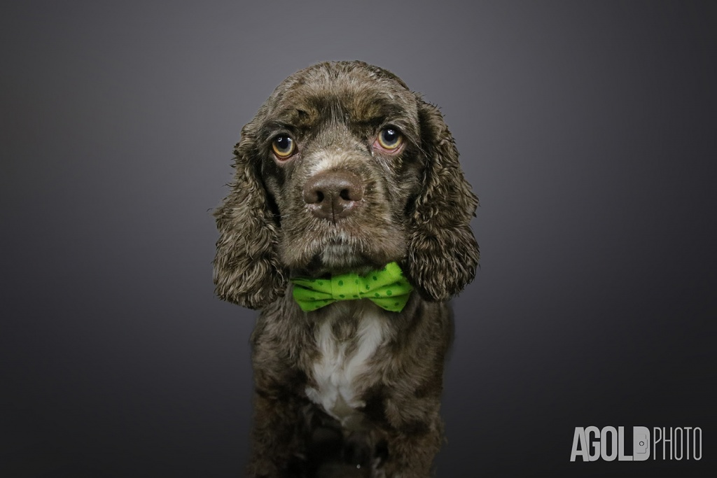 AGoldPhoto_Humane Society of Tampa Bay_Tampa Pet Photography_7