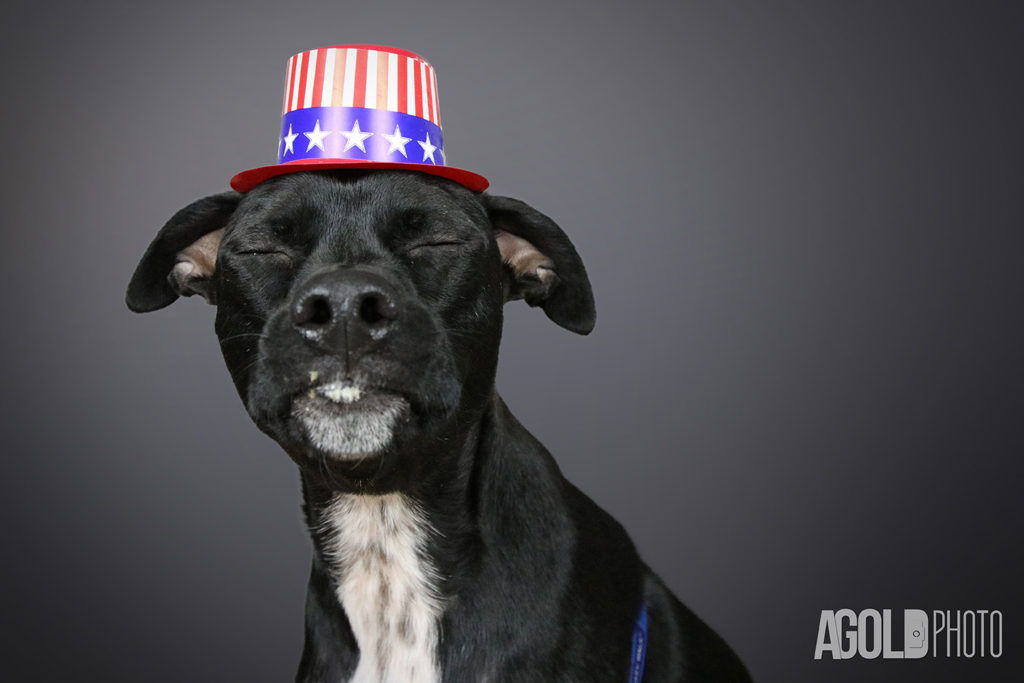 AGoldPhoto_Mister_Tampa Pet Photography_4