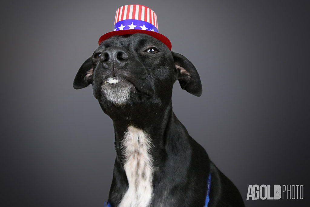 AGoldPhoto_Mister_Tampa Pet Photography_5