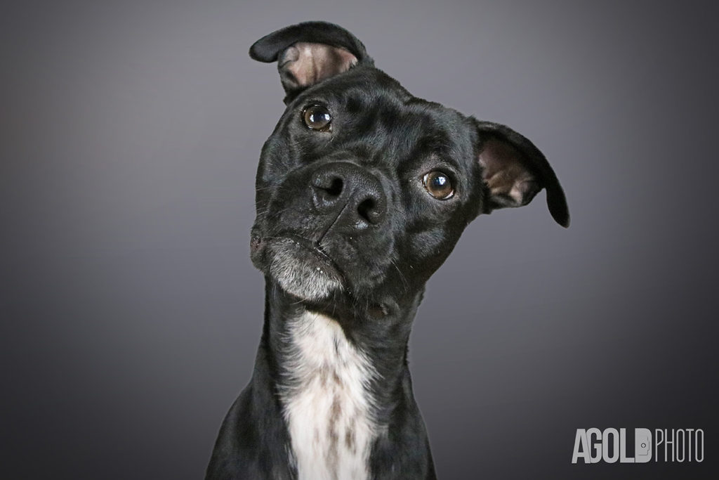 AGoldPhoto_Mister_Tampa Pet Photography_9