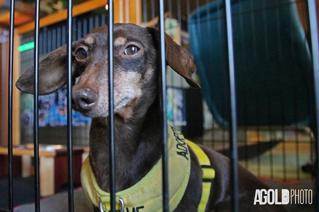 AGoldPhoto_Aloft Asheville_Tampa Pet Photography_19