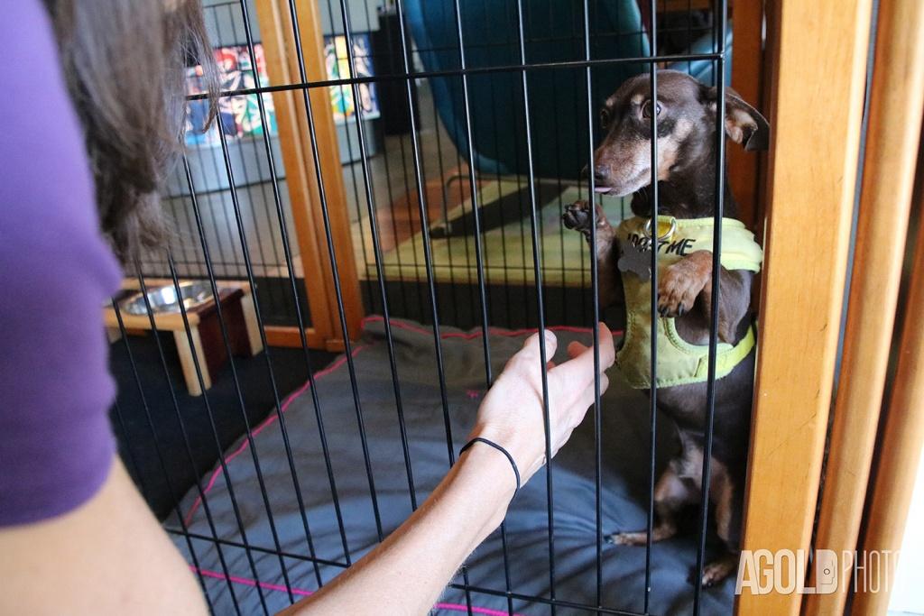 AGoldPhoto_Aloft Asheville_Tampa Pet Photography_2