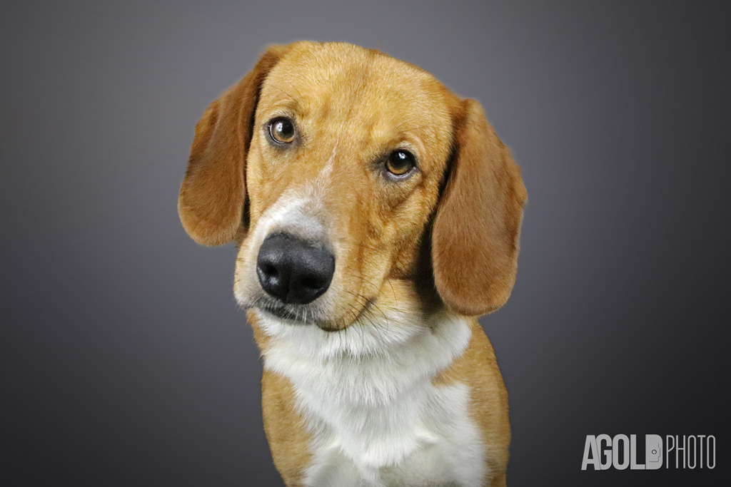AGoldPhoto_Humane Society Tampa Bay_Tampa Pet Photography_3