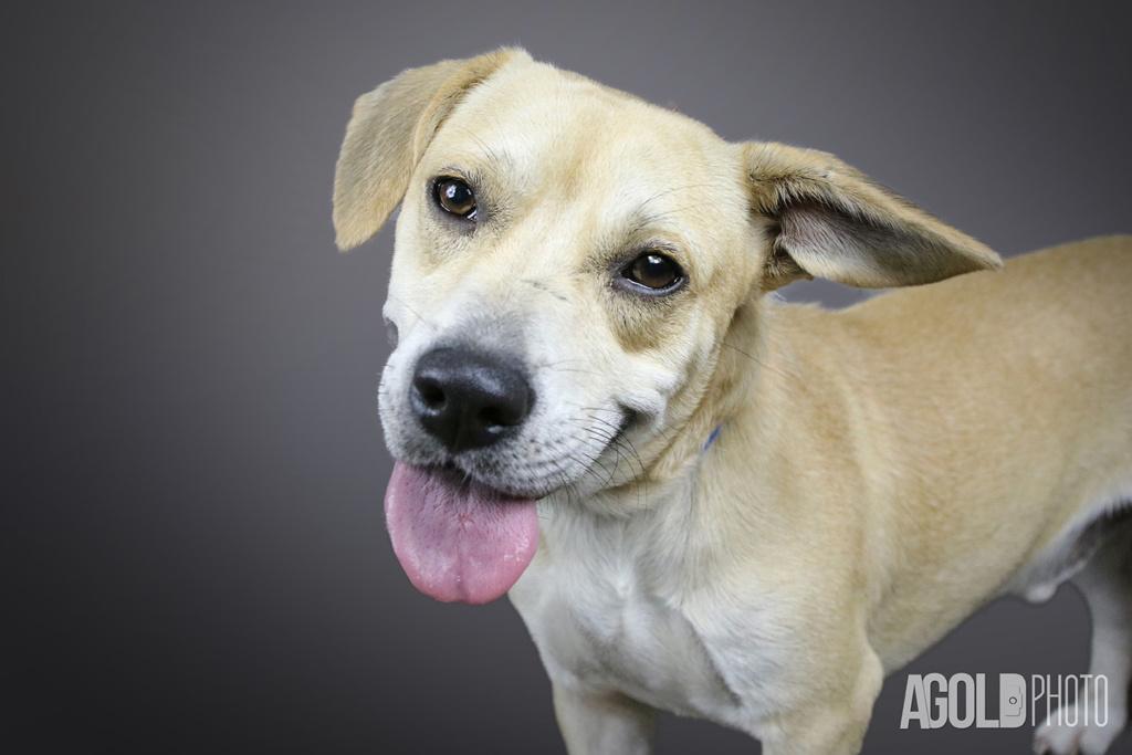 AGoldPhoto_Humane Society Tampa Bay_Tampa Pet Photography_4