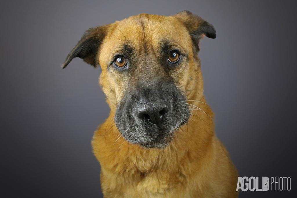 AGoldPhoto_Humane Society Tampa Bay_Tampa Pet Photography_9