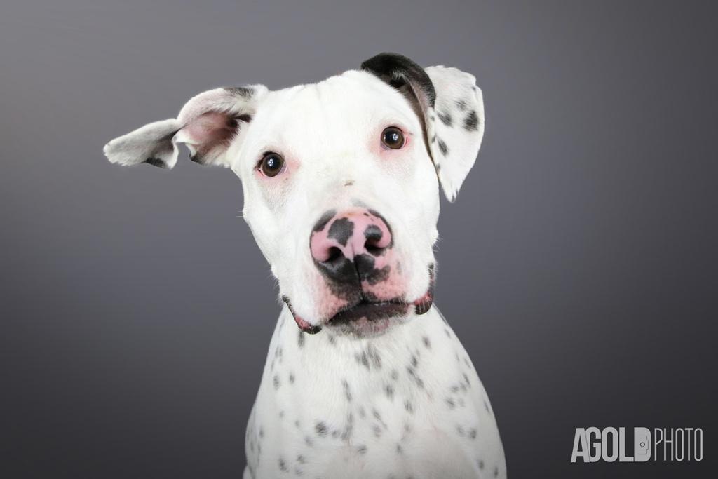 AGoldPhoto_Humane Society of Tampa Bay_Tampa Pet Photography_1