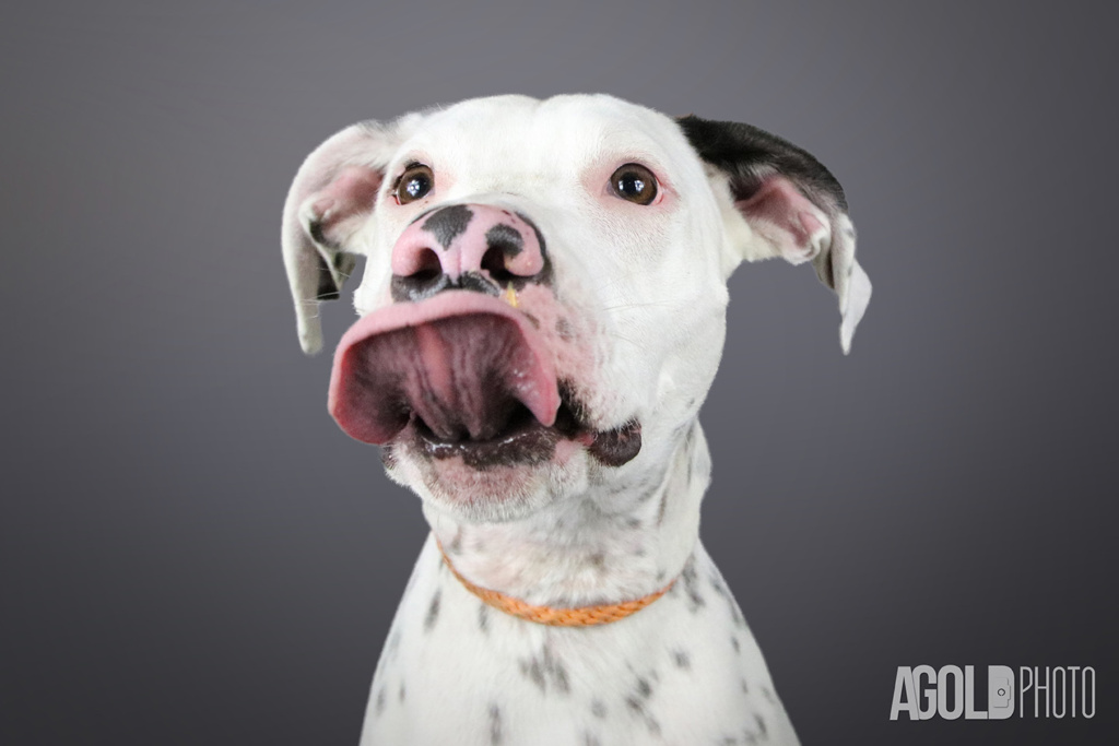AGoldPhoto_Humane Society of Tampa Bay_Tampa Pet Photography_10