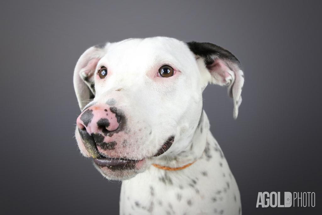 AGoldPhoto_Humane Society of Tampa Bay_Tampa Pet Photography_2