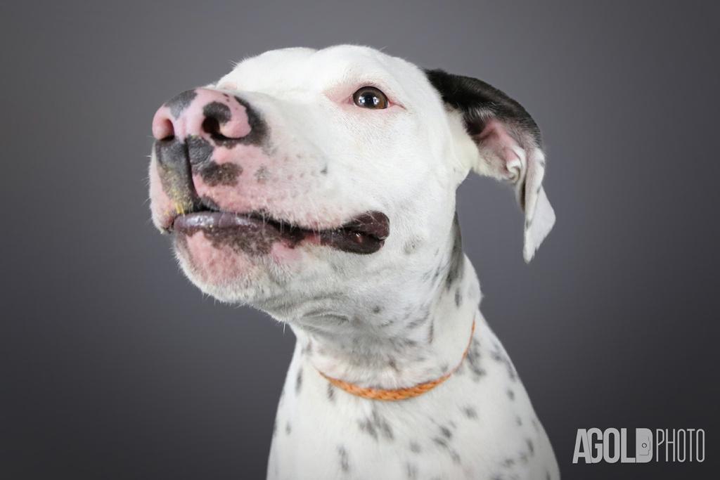 AGoldPhoto_Humane Society of Tampa Bay_Tampa Pet Photography_4