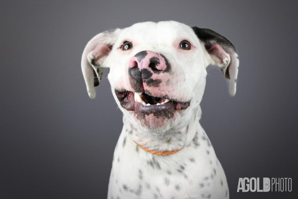 AGoldPhoto_Humane Society of Tampa Bay_Tampa Pet Photography_6