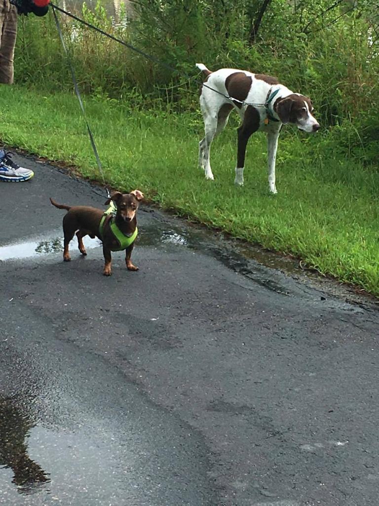 Aloft Asheville Dog Adoption 1