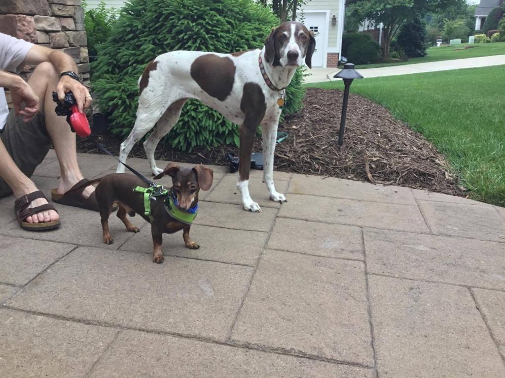 Aloft Asheville Dog Adoption 4