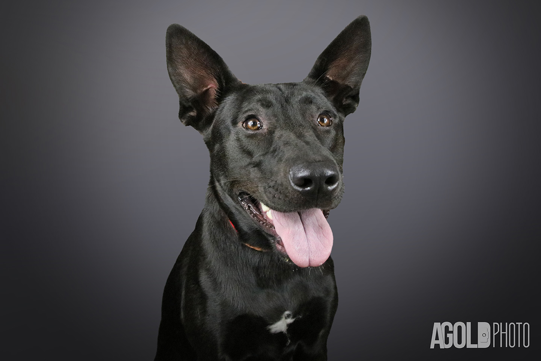 Fiona_Humane Society Tampa BayTampa Pet Photography_2
