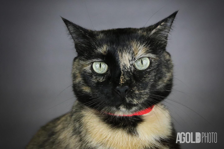 Gabby_Humane Society Tampa BayTampa Pet Photography_13