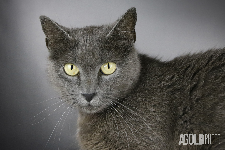 Jojo_Humane Society Tampa BayTampa Pet Photography_4