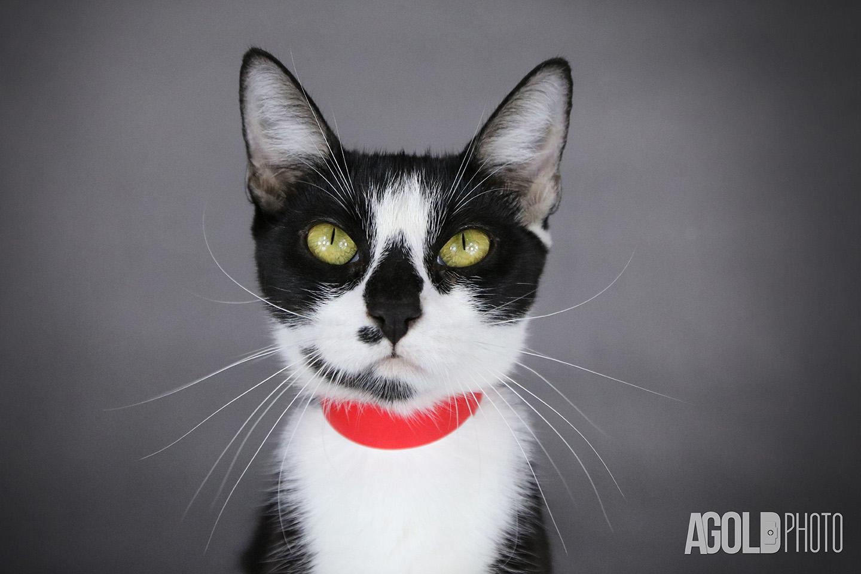 Lily_Humane Society Tampa BayTampa Pet Photography_5