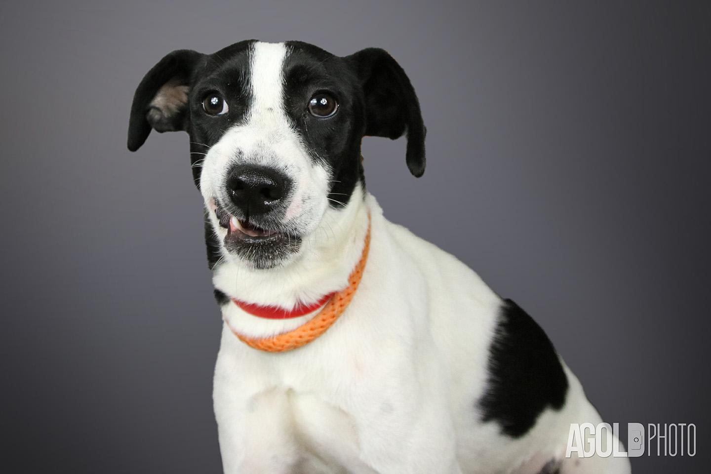 Mimi_Humane Society Tampa BayTampa Pet Photography_6