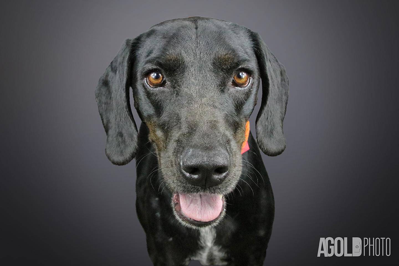 Myra_Humane Society Tampa BayTampa Pet Photography_8