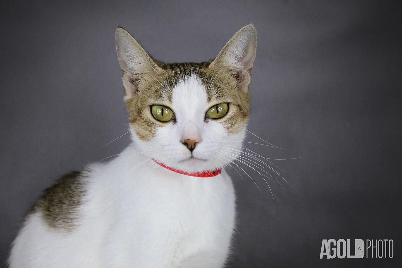 Paris_Humane Society Tampa BayTampa Pet Photography_9