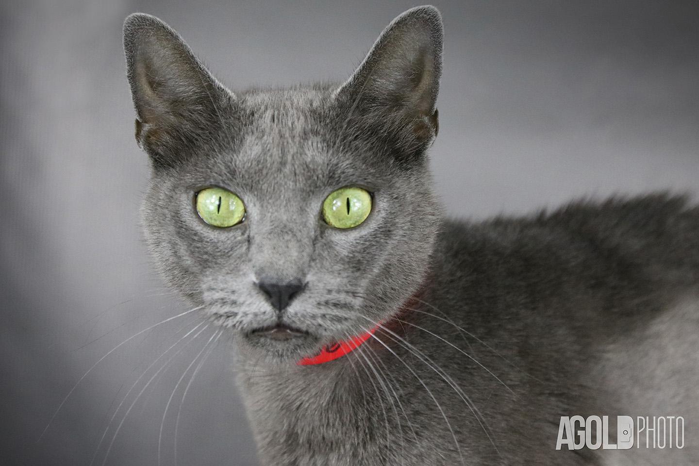Simone_Humane Society Tampa BayTampa Pet Photography_13